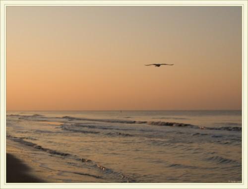 Mouette au coucher du soleil sur la mer du Nord